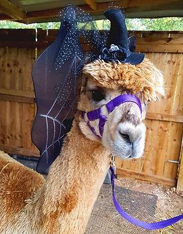 alpaca-halloween-802x1024.jpg
