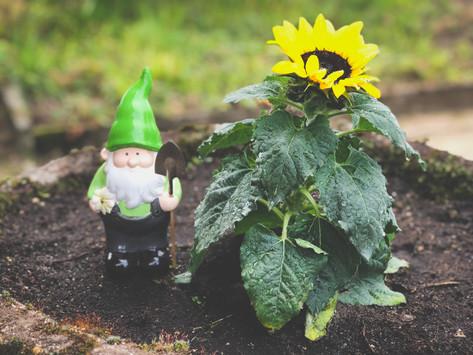Kleingarten-Fortschritte - Mühsam ernährt sich der Gartenzwerg