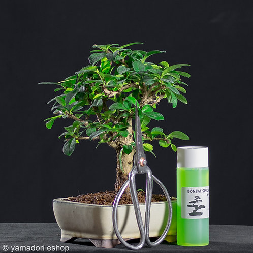 Fukien Tea kit