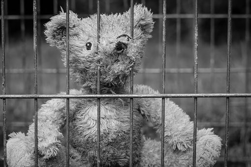 BEAR IN JAIL.jpg