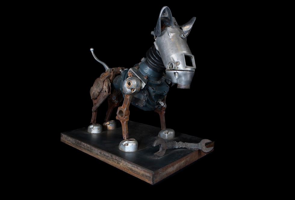 joe-rush-dog-2.jpg