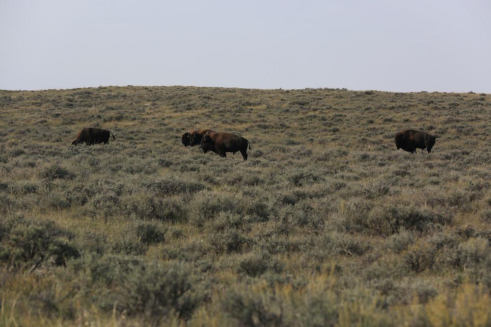 Montana (36 of 47).jpg