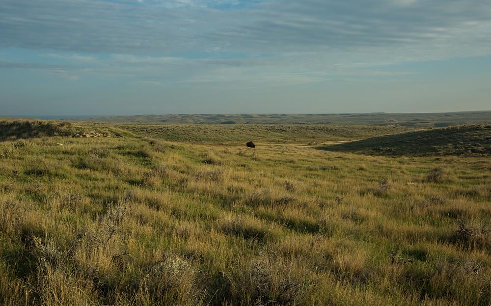 Montana (5 of 47).jpg