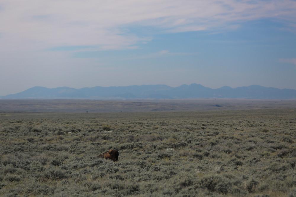 Montana (45 of 47).jpg