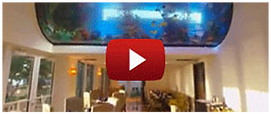 Royal Blues Hotel Fishtank Main Page2.pn