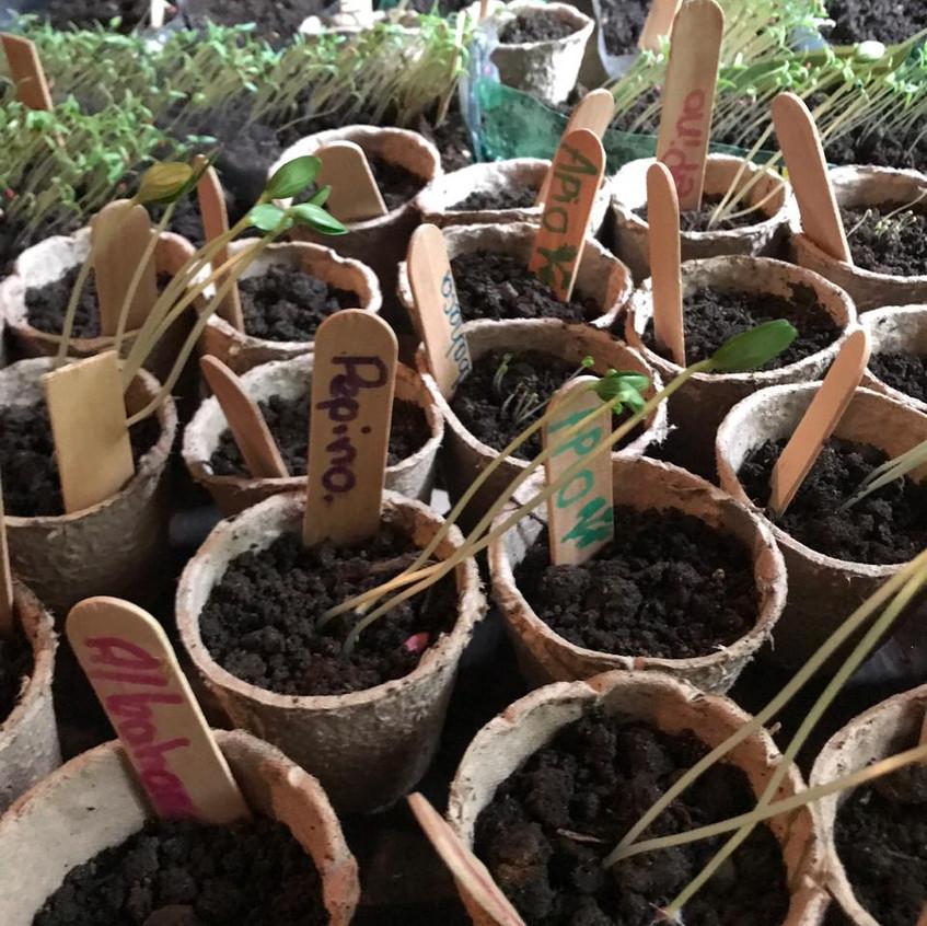 plants gfs