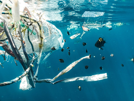 Microplastics: Should We Be Concerned?
