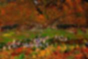 Travel to Georgia in autumn