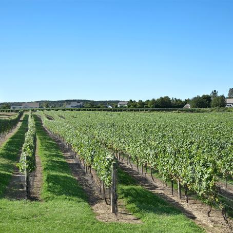 Long Island's Wine Country