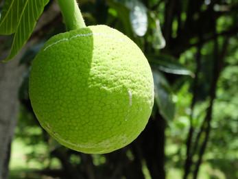 PURE : Graisses, sucres et légumes verts