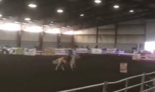 Check out a Jaure Performance Horse in ACTION… April 6, 2017 – Kickin Dot by Kick It In The Nic star