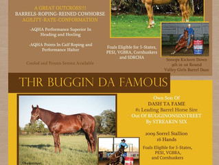 Looking for a rodeo or performance horse?