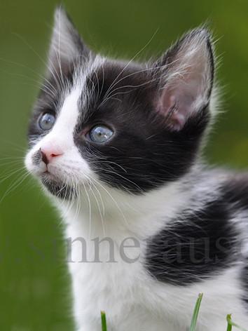 Kitten-1-K.jpg