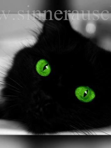 Misy green-T.jpg