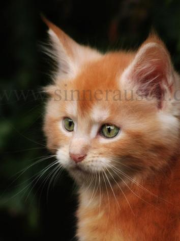 kitty-01-4-3-K1.jpg
