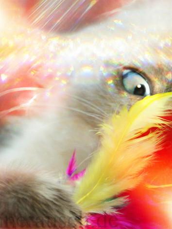 crazy-Kitty-02-K.jpg