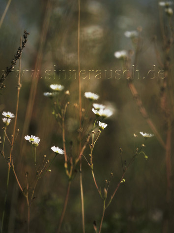 _DSC3695_Snapseed-K-T.jpg
