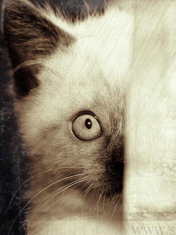 cat-01-G.jpg