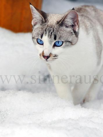 Snowcat-V.jpg