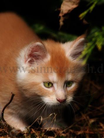 Kitten-1-K1.jpg