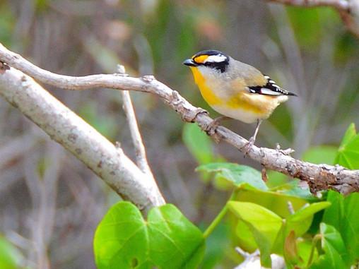 Bird-watching on Coochiemudlo Island