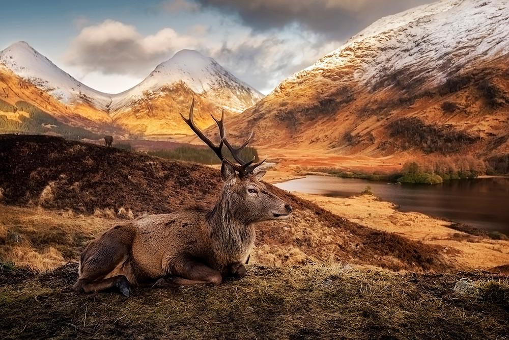 Król Szkocji
