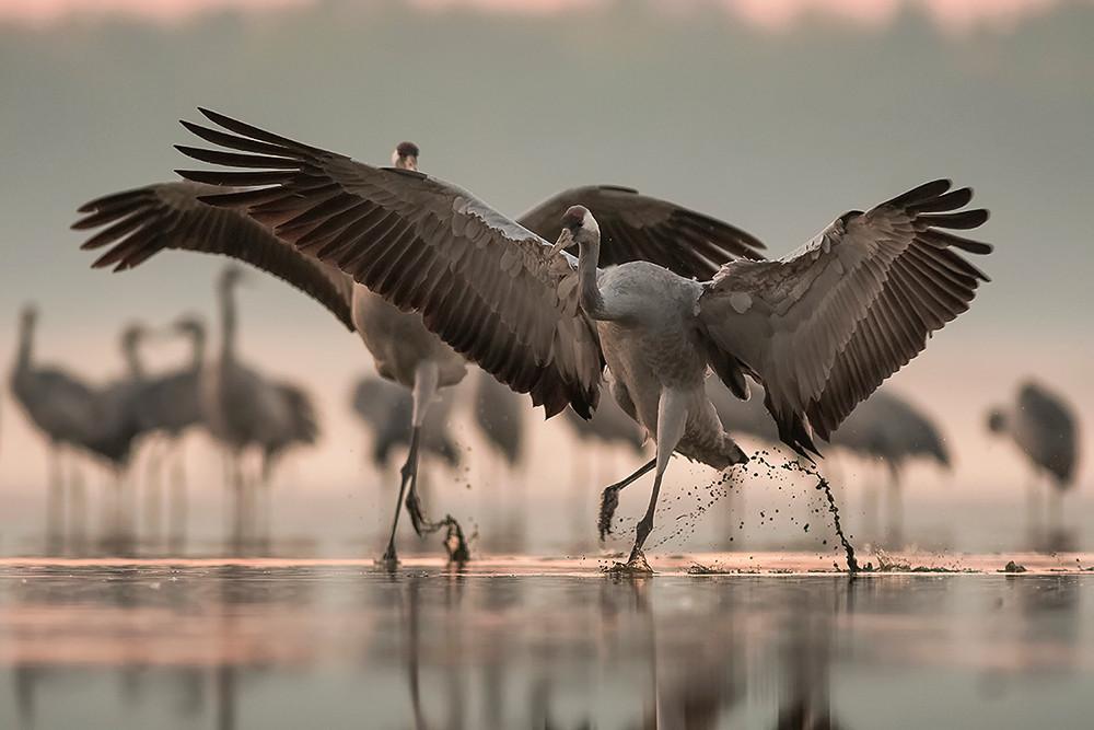 Rozwinąć skrzydła