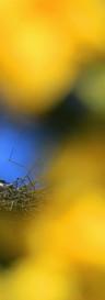 Bocian w naturalnym okienku. z uznaniem autorstwa copy.jpg