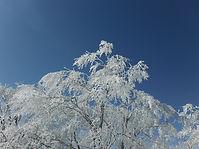 山 冬 (4).JPG