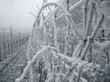 Daylesford Wine Tours Frosty Times Brings The Tasters Out!