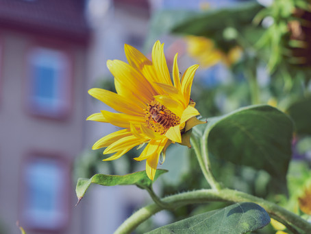 Bee-Friendly In The City