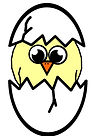hatching-chick-illustration.jpg
