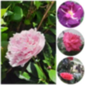 photocollage_202061112832223.jpg
