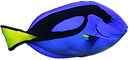 dory%20fish_edited.png