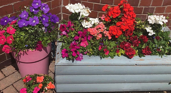 mixed flower tub.jpg