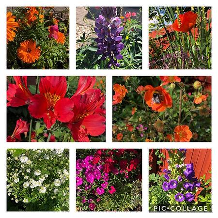 collage flower.jpg