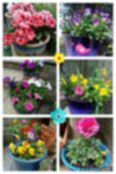 mel's flowers.jpg