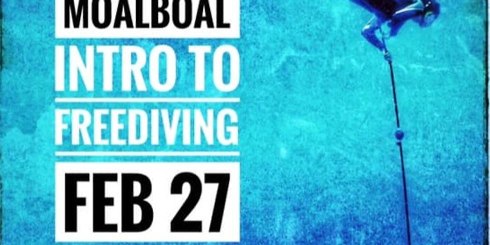 INTRO to FREEDIVING - Promo Price!