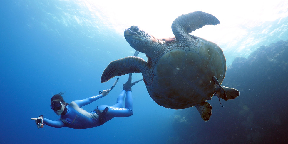 AIDA 2 Freediver (pool) - Theory, Dry practice and Pool - ENGLISH
