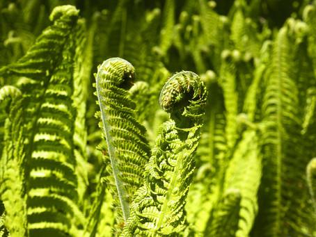 We ❤ Ferns!
