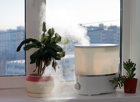 Tips for Keeping Your Houseplants Alive Over the Winter