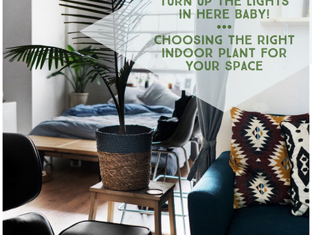How to Choose the Right Plant for Your Space