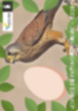 doc visuel et jeux fete de la nature 201
