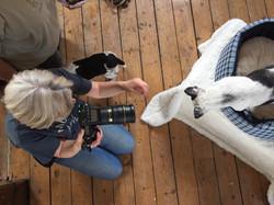 Pet Photographer Extraordinaire