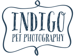 indigo-blue-800px