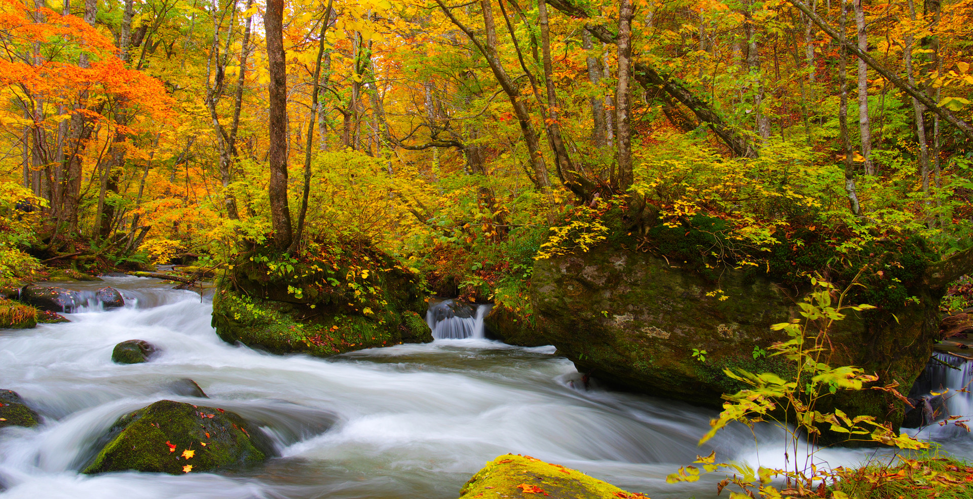 Autumn Colors of Oirase River, located a