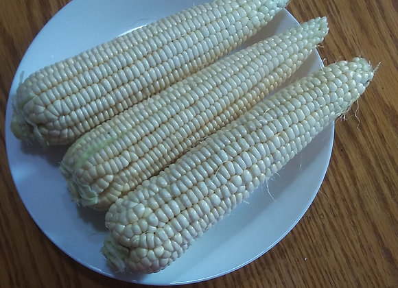 8-10 Cobs of Corn 糯玉米8-10穗(个小)