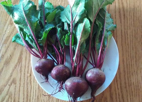 4 Beets 甜菜4棵