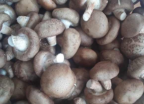 1lb Fresh Chinese Shiitake Mushrooms 新鲜香菇(花菇) 1磅