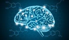 head-human-nerves-body-brain-Serotonin-n